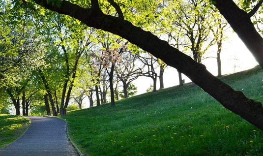 Парк недалеко от улицы Ольги Гавловой